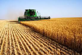 Il Governo kazako annuncia un piano di sviluppo del settore agroalimentare: potenziali opportunità di investimento
