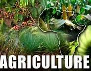 Rilancio del settore dell'agricoltura e dell'agro-industria