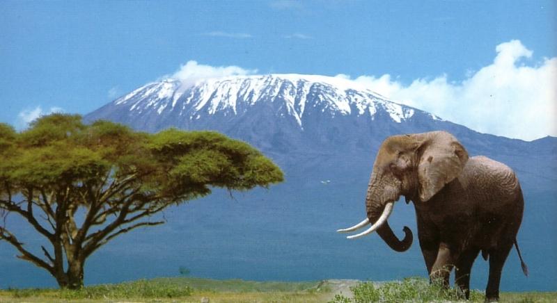 Dati OMT sul turismo in Tanzania