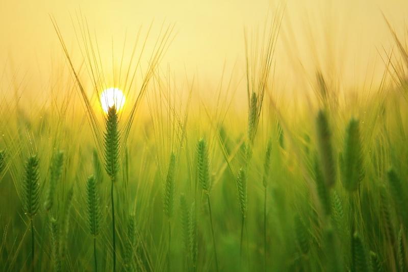 Il Settore Agricolo e dell'Allevamento in Brasile: Analisi, Prospettive e Opportunità per le Imprese Italiane.