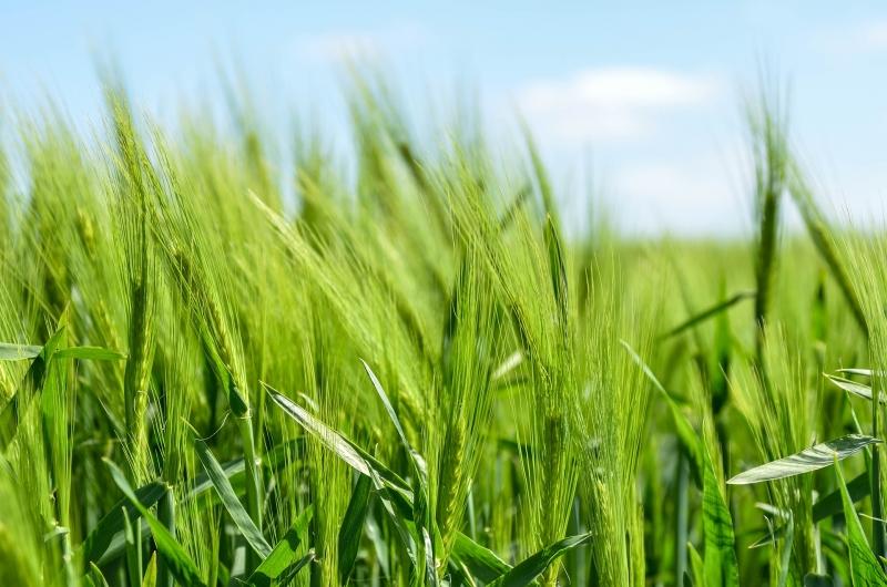 Agricoltura in Bulgaria, ottimi risultati e prospettive future. L'analisi di Unicredit Bulbank
