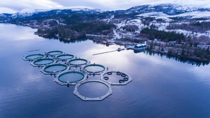Norvegia. L'industria dell'acquacoltura e la produzione e l'esportazione di prodotti ittici.